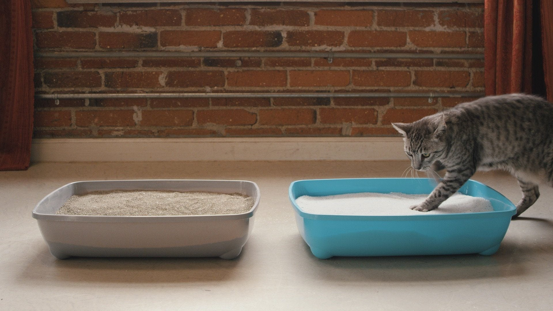 How To Help Your Cat Transition To A New Litter