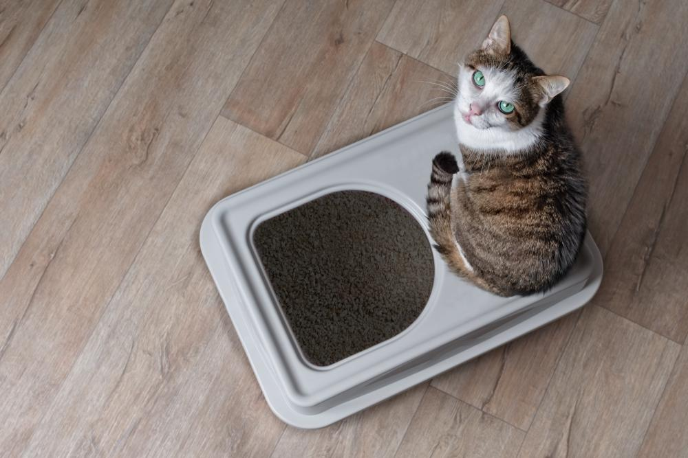 Top 10 DIY Litter Box Hacks