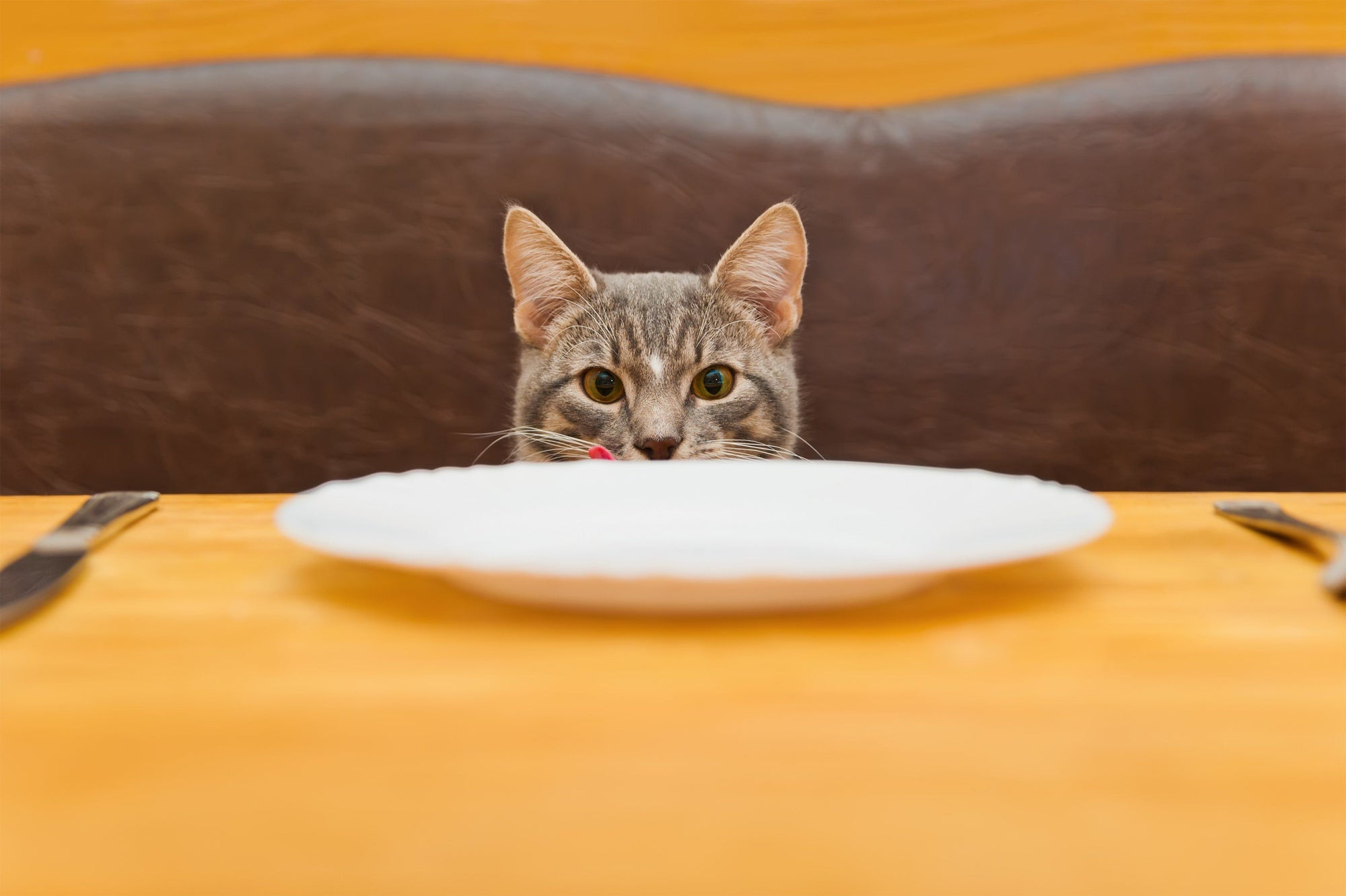 4 Things to Avoid Feeding Your Cat