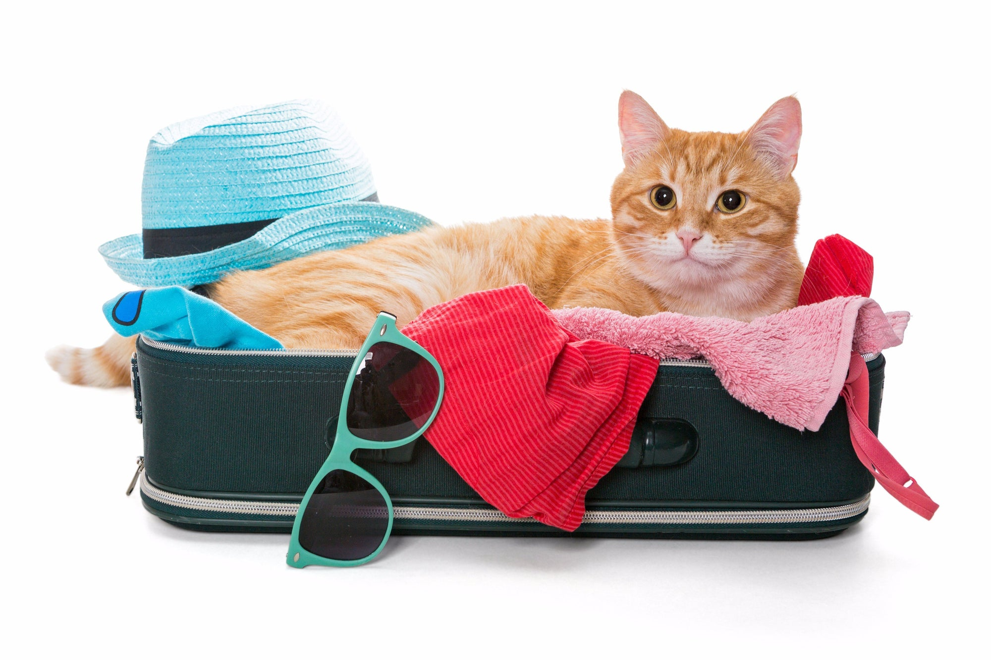 Making Travel Easy on Your Cat This Holiday Season