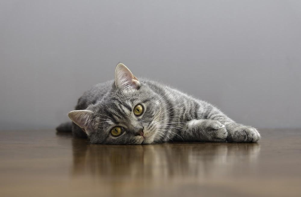 Vomiting in Cats: When Should You Be Concerned?