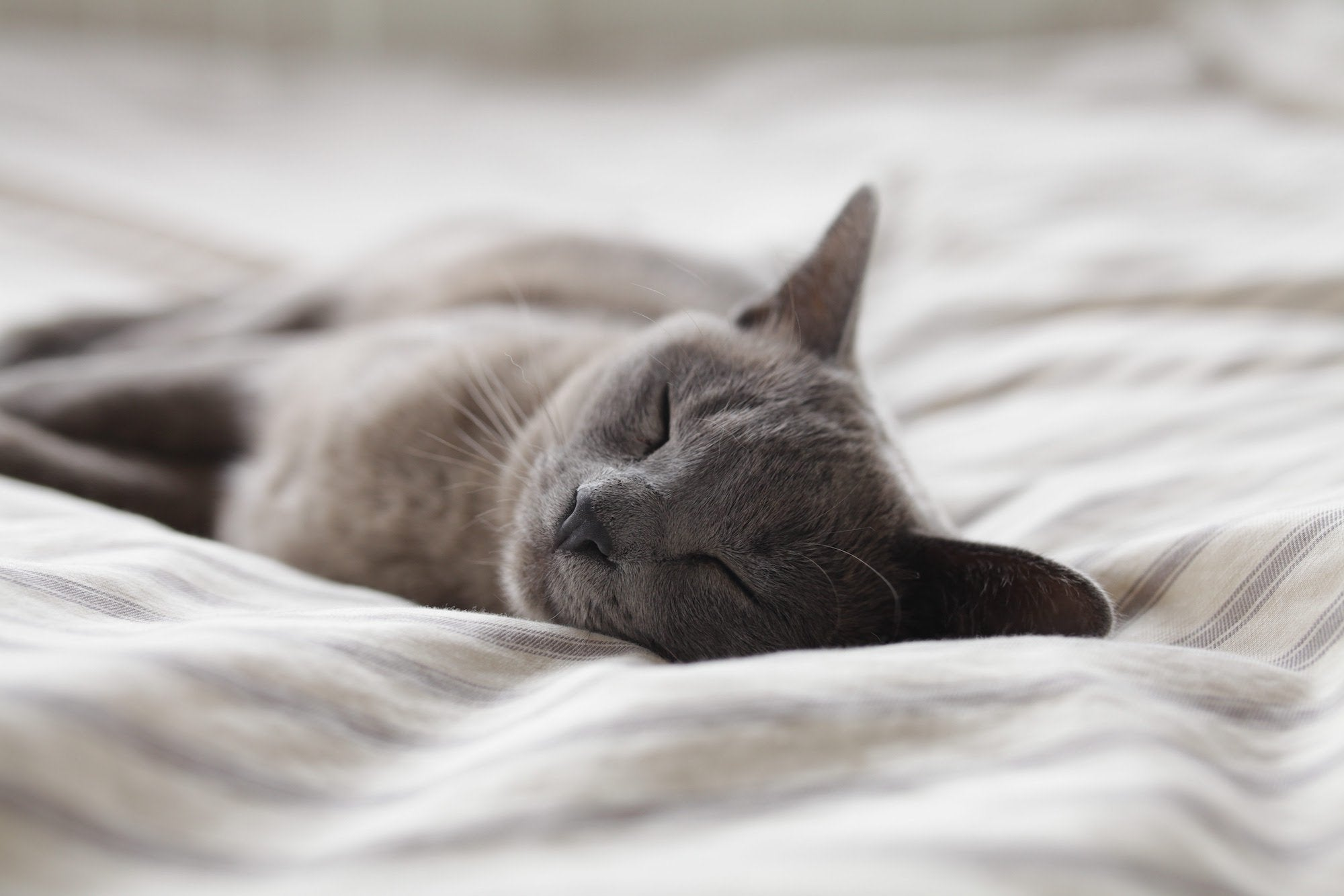 How to Tell if Your Cat Has a UTI