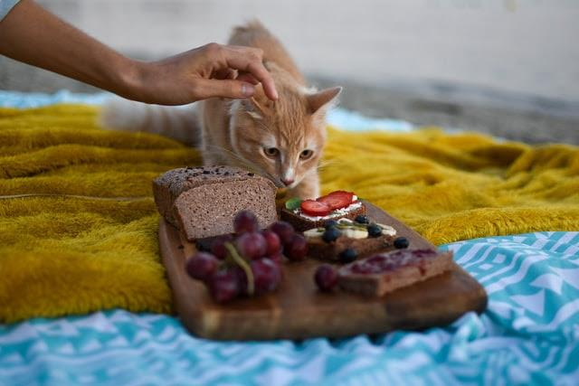 Tips for a Cat Food Thanksgiving Dinner