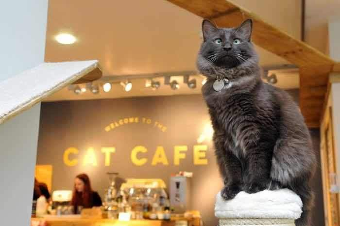Check Out These Awesome Cat-Friendly Businesses