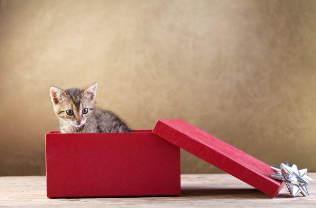Gifts for Cat Lovers v.s. Giving Pets as Gifts