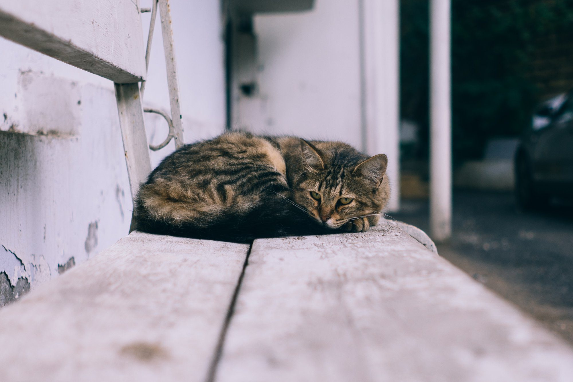 Free-Roaming Felines: How You Can Help a Community or Feral Cat