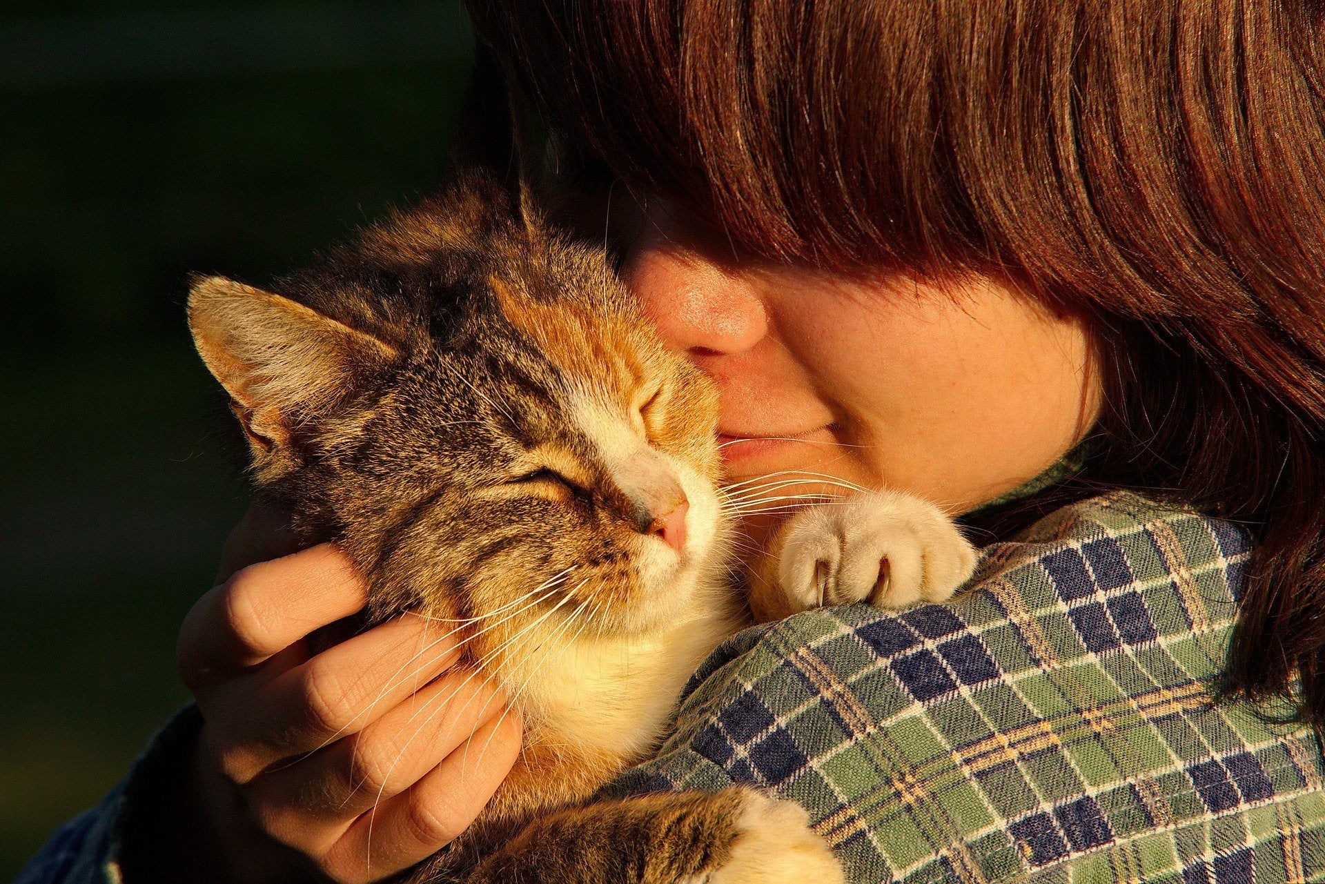 Just the Cat Facts: Kitty-Loving Teachers Who Make a Difference