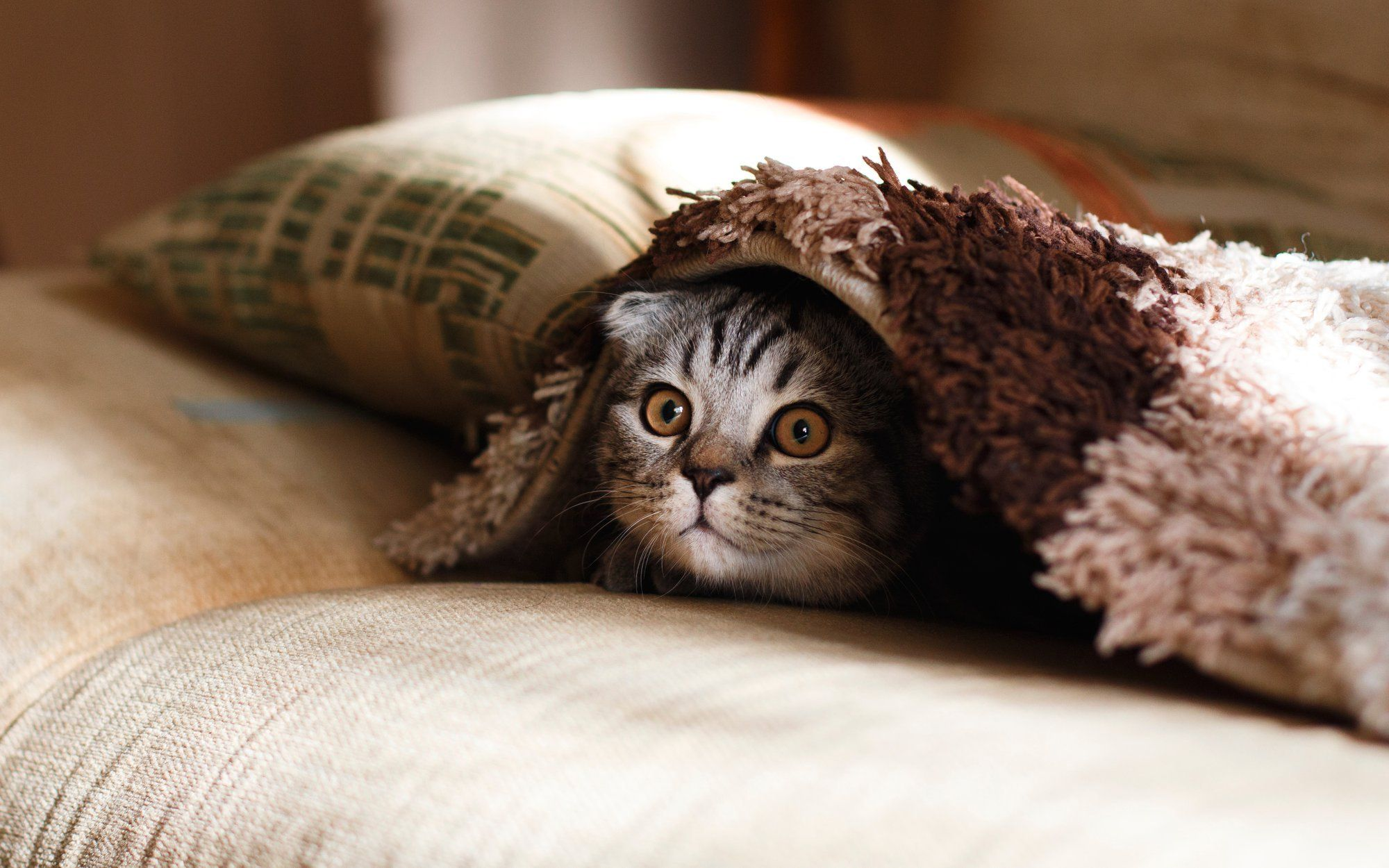 Preventing Cat Anxiety: Ways to Entertain Your Cat While You're Away