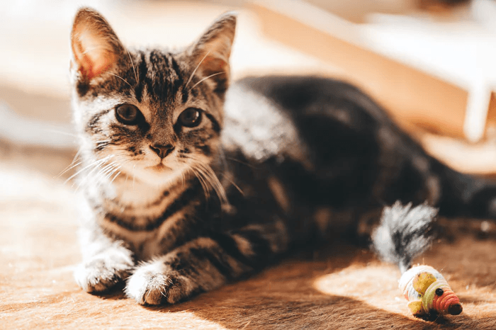 What Are the Different Types of Cat Litter?