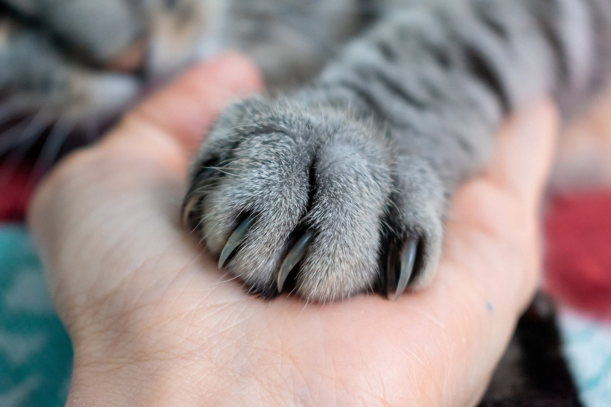 Why You Should Never Declaw Your Cat