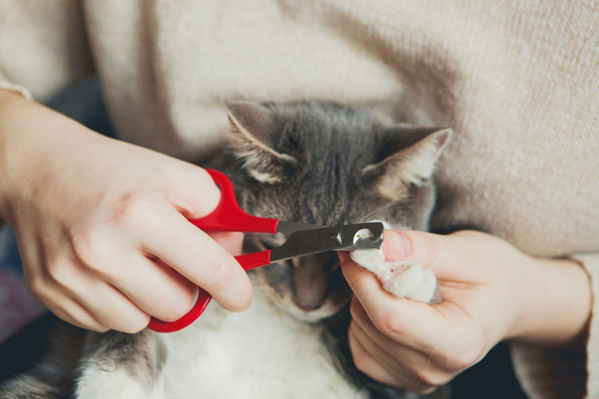 How to Trim Your Cat's Nails Painlessly
