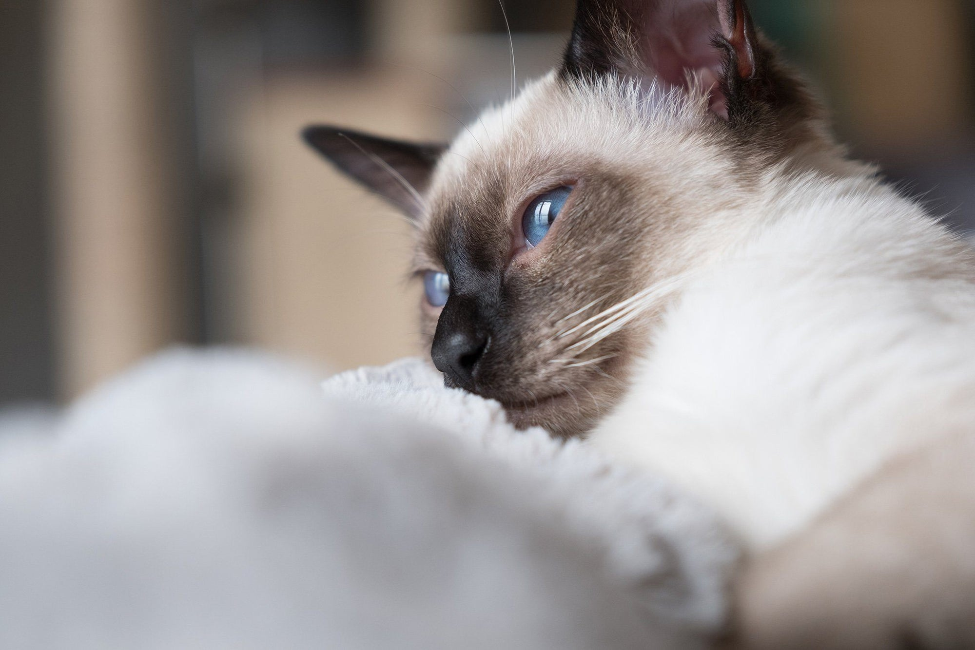 Cat Dementia: A Very Real & Scary Health Condition Pet Parents Should Watch For