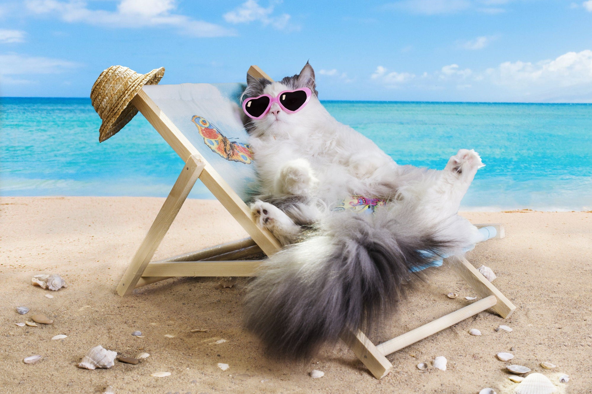Help Your Cat Beat the Summer Heat