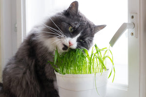 The Best Plants That Are Safe for Cats to Eat