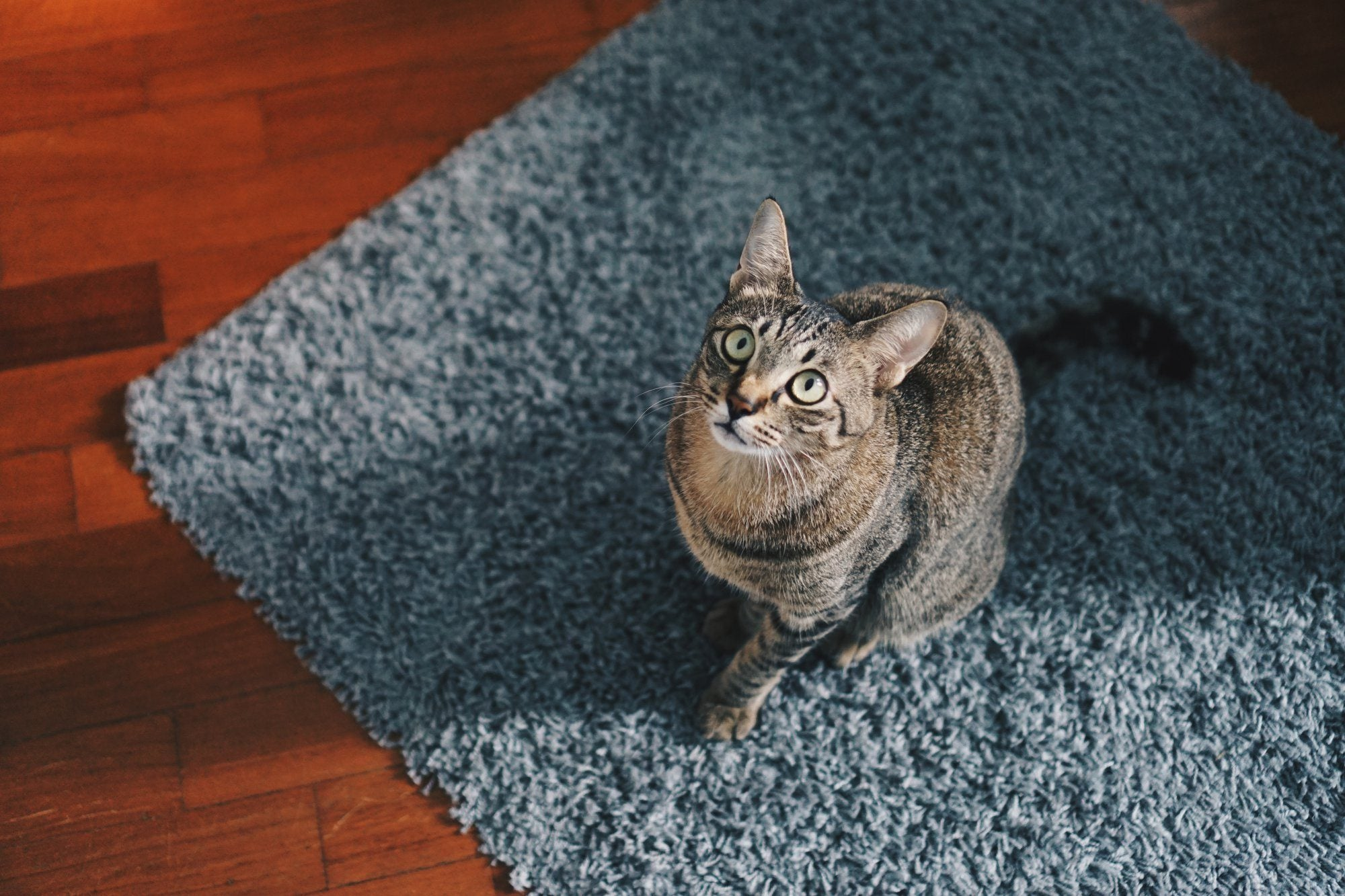 Floor Cleaning Products: What Every Cat Mom (and Dad) Should Know