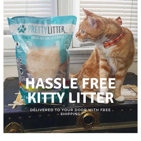 What's the Deal With Cats and UTIs? - PrettyLitter