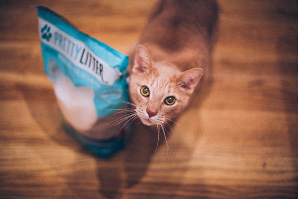 How Stress Affects Your Cat's Health - PrettyLitter