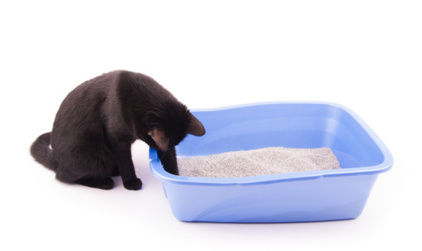 cat digging in litter box