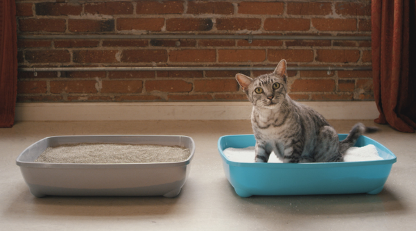 Cat in Cat Litter
