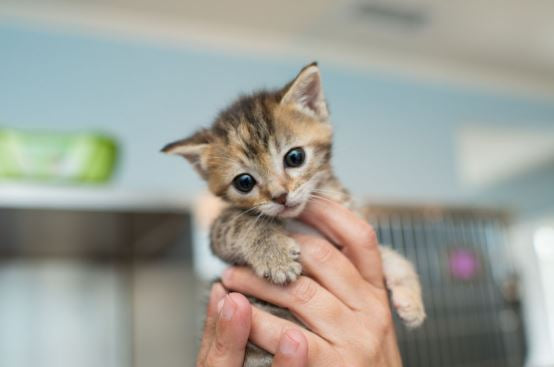 person holding tiny kitten