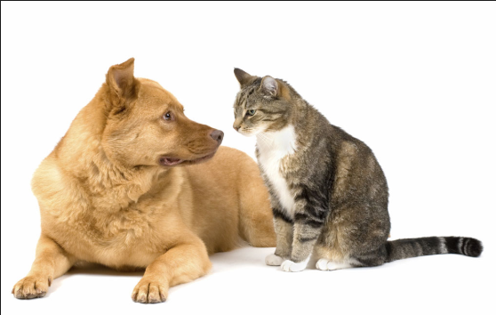 Cat meeting Dog