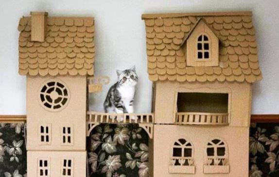 cat in castle