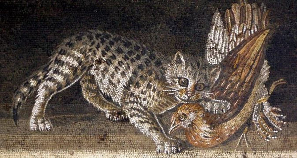 cats in ancient rome