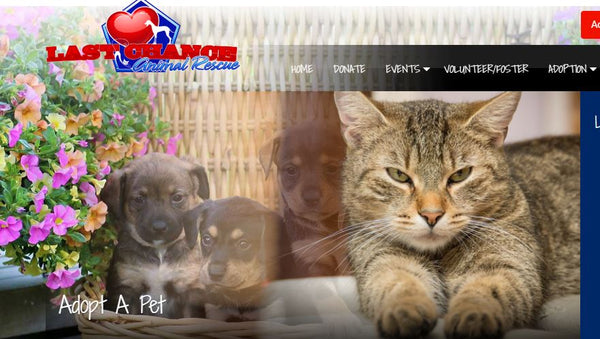 Last Chance for Animals Pet Rescue