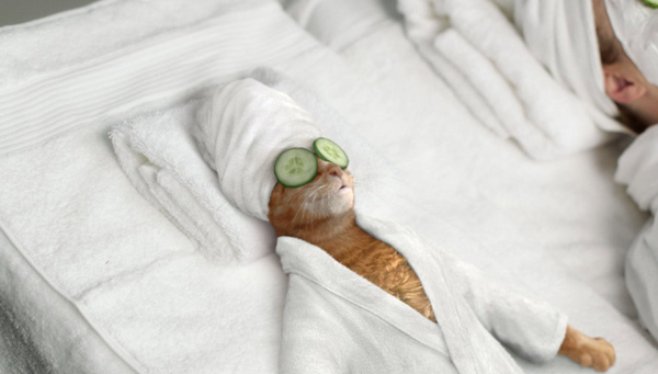 Pampered Cat