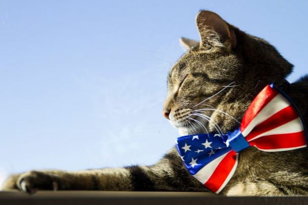 cat with american flag bowtie