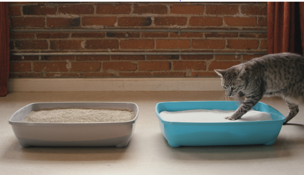 Cat with Cat Litters
