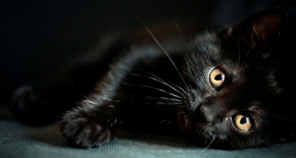 5 Reasons Why Black Cats Make Great Pets Prettylitter