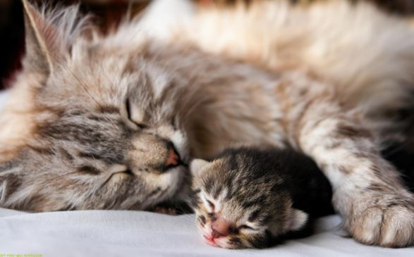 mom cat and kitten