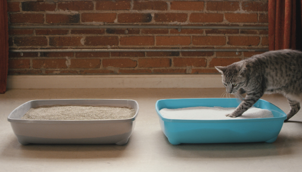 Cat Litter Photo
