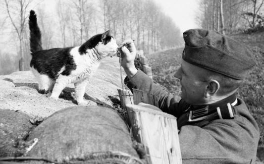 cat in world war 2