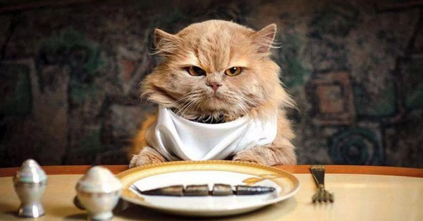 Cat with Plate