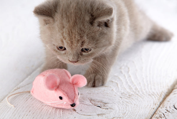Kitten with Pink Mouse Toy