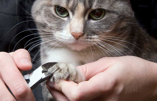 Cat Getting Nails Cuts