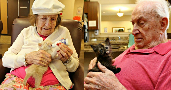 Old People with Kittens