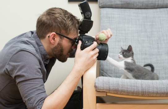Person taking photo of cat