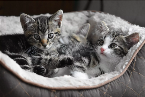 Two kittens need PrettyLitter