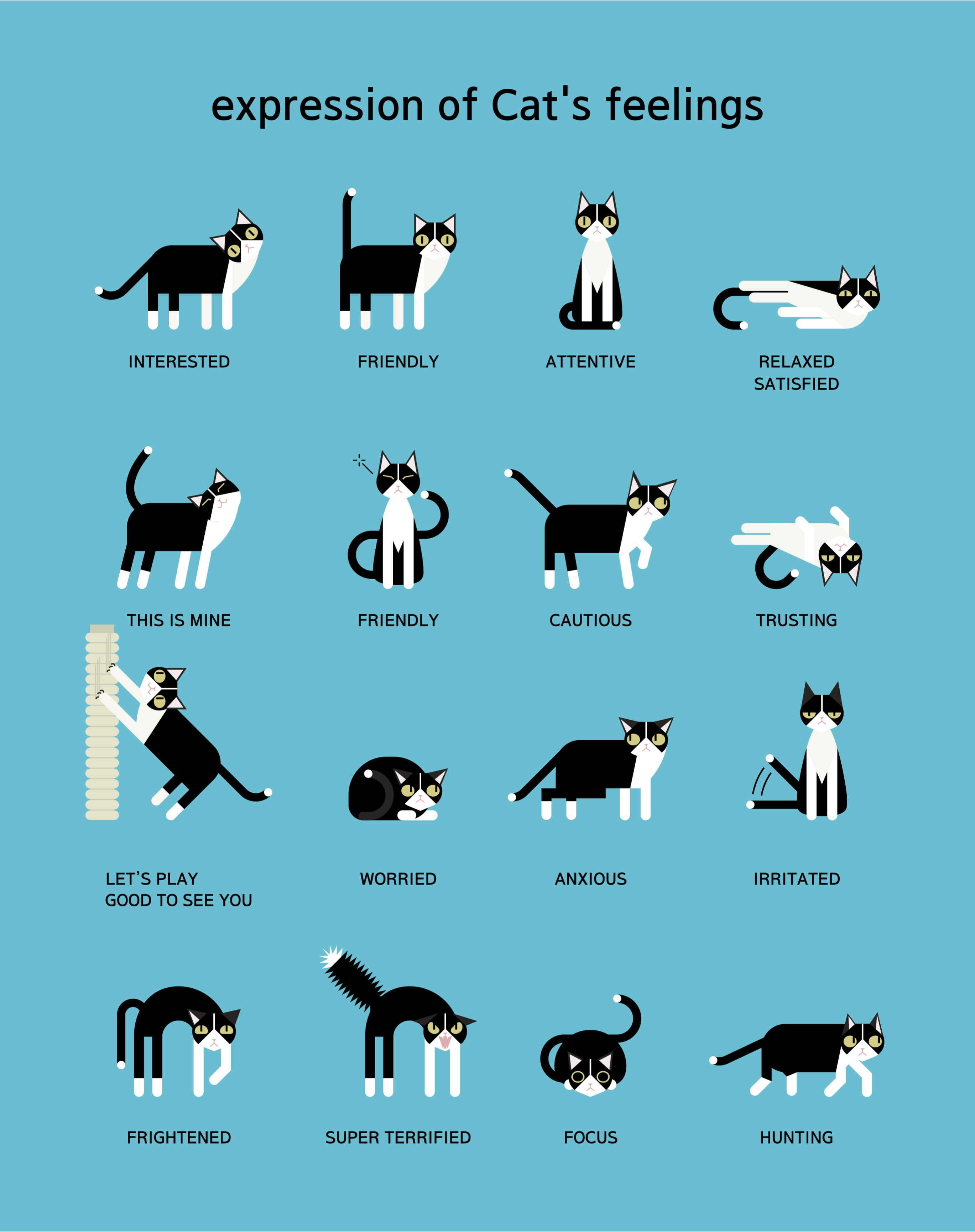 What Cat Poses Mean