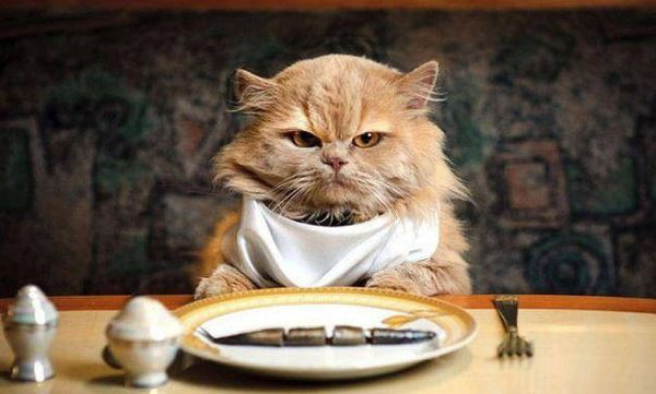 cat eating fish at table