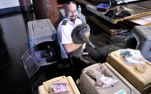 cats in cargo