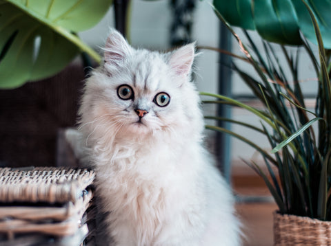 PrettyLitter natural remedies for feline stress cat stress