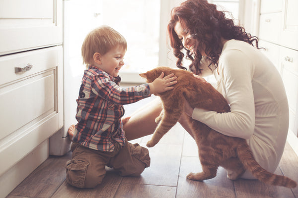 introducing your cat to your little boy