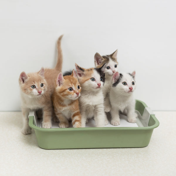 PrettyLitter multiple cat in litterbox