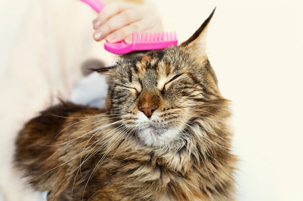 cat being groomed