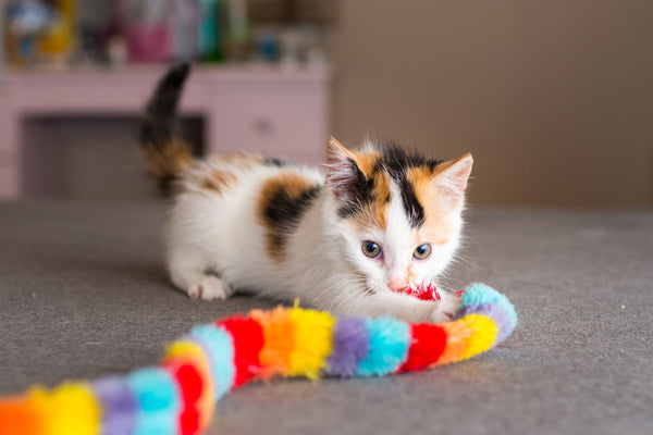 Kitten With Toy In It's Mouth