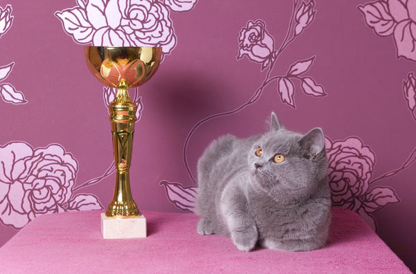 cat pageant show winner